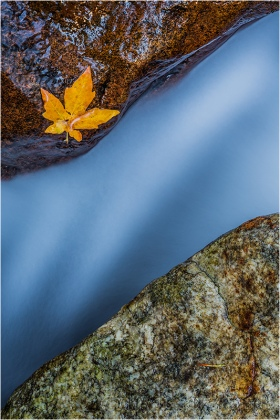 Gary Hart Photography, Single Leaf, Bridalveil Creek, Yosemite