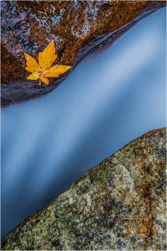Gary Hart Photography, Single Leaf, Bridalveil Creek, Yosemite