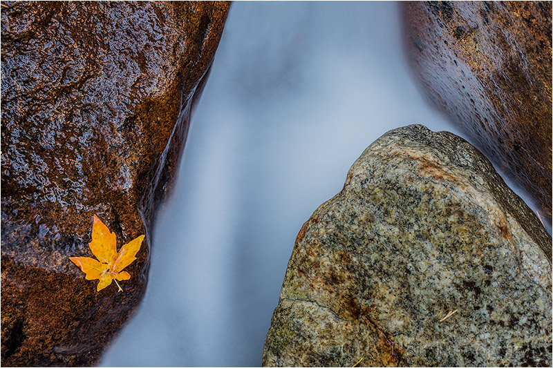 Autumn Leaf and Bridalveil Creek, Yosemite