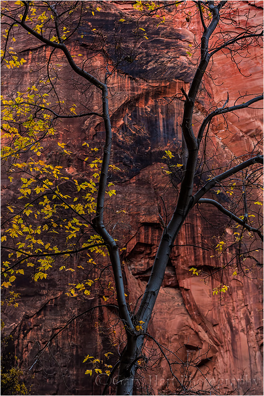 Tree and Sandstone, Virgin River Canyon, Zion National Park Canon EOS 5D Mark III 1/3 second F/11 ISO 400 109 mm