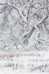 White-Out, Cook's Meadow, Yosemite