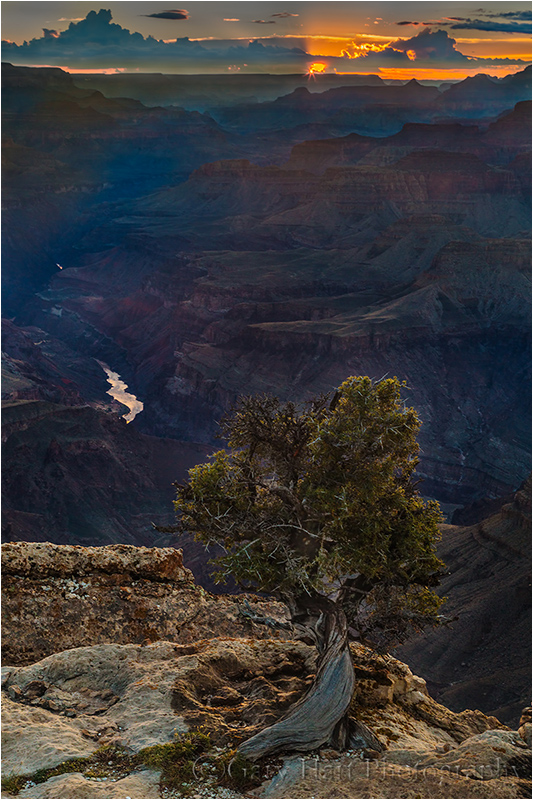 Tree and Sunstar, Lipan Point, Grand Canyon