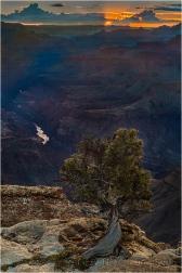 Tree and Sunstar, Lipan Point, Grand Canyon