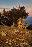 Gary Hart Photography, Bristlecone Moonrise