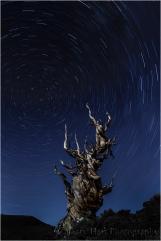 Star Trails and Ancient Bristlecone, Schulman Grove, White Mountains Bristlecone Pine Forest