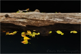 Gary Hart Photography, Yosemite autumn leaves