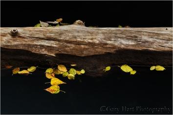 Gary Hart Photography, Yosemite autumn leaves
