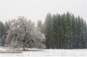 Gary Hart Photography: Snowfall, Cook's Meadow, Yosemite