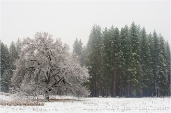 Gary Hart Photography: Snowfall, Cook's Meadow, Yosemite