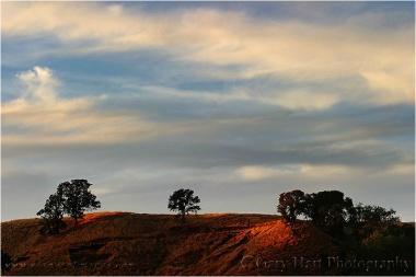 Gary Hart Photograph: Oaks at Sunset, Folsom, California
