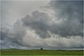 Gary Hart Photography: Under the Weather, Sierra Foothills, California