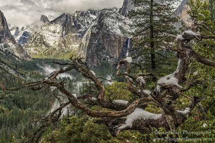 Gary Hart Photography: Old Tree, Half Dome and Bridalveil Fall, Yosemite