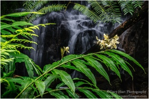 Gary Hart Photography: Hidden, Akaka Falls State Park, Hawaii