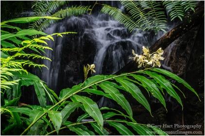 Gary Hart Photography: Hidden, Akaka Falls State Park, Hawaii
