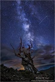 Gary Hart Photography: Bristlecone Night, White Mountains, California