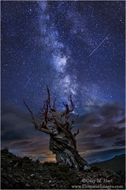 Gary Hart Photography: Bristlecone Night, Milky Way from the White Mountains, California