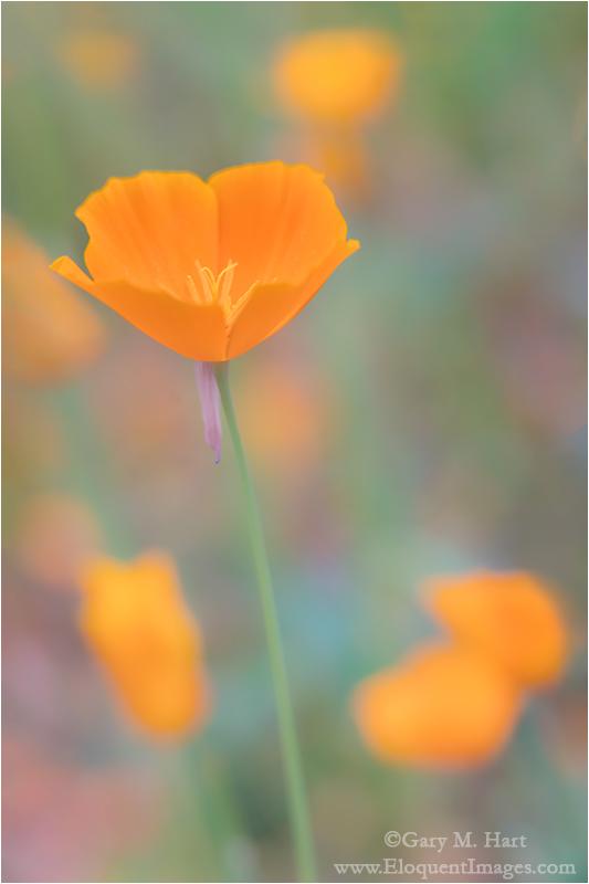 Gary Hart Photography: Foothill Gold, Mokelumne River, California
