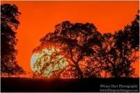 Gary Hart Photography: Big Sun, Sierra Foothills, California