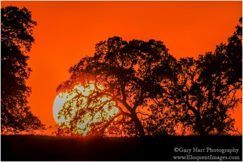 Gary Hart Photography: Big Sun, Sierra Foothills, California