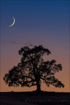 Gary Hart Photography: New Moon, Sierra Foothills, California