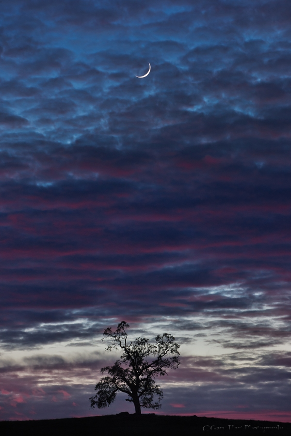 Gary Hart Photography: Tree and Crescent, Sierra Foothills, California
