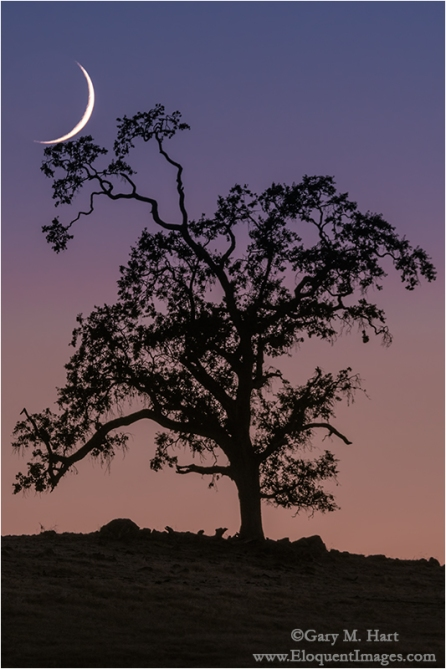 Gary Hart Photography: Cradled Crescent, Sierra Foothills