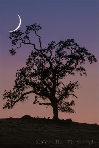 Gary Hart Photography: Cradled Crescent, Sierra Foothills