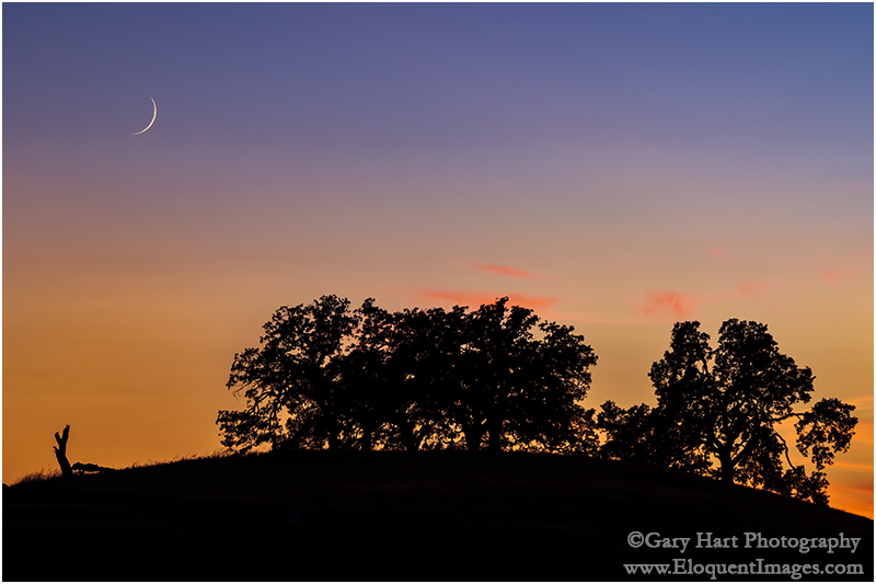 Gary Hart Photography: Sunset Pastoral, Sierra Foothills