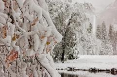 Gary Hart Photography: Fall Into Winter, Valley View, Yosemite