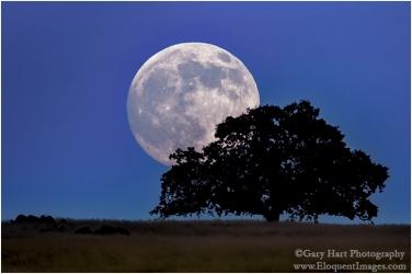 Gary Hart Photography: Moonrise, Sierra Foothills, California