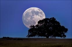 Gary Hart Photography: Foothill Moonrise, Sierra Foothills, California