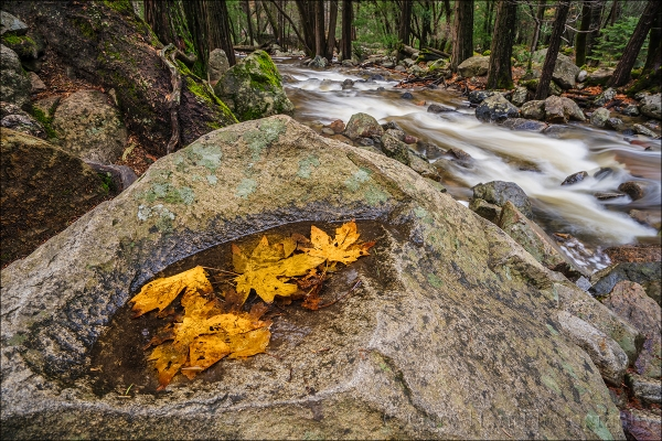 Gary Hart Photography: Floating Autumn Leaves, Bridalveil Creek, Yosemite