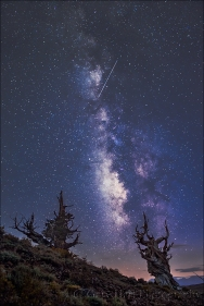 Gary Hart Photography: Meteor and Milky Way, Bristlecone Pine Forest, White Mountains, California