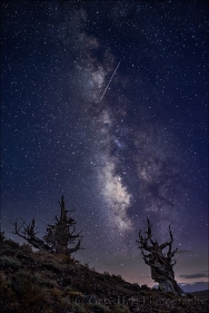 Gary Hart Photography: Milky Way and Meteor, Bristlecone Pine Forest, White Mountains, California