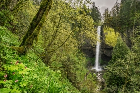 Gary Hart Photography: Latourell Fall and Wildflowers, Columbia River Gorge, Oregon