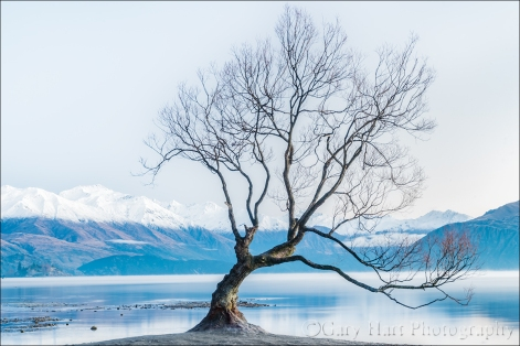 Gary Hart Photography: Lone Tree, Lake Wanaka, New Zealand