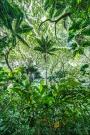 Gary Hart Photography: Looking Up, Hawaii Tropical Botanical Garden, Hawaii