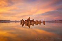 Morning Reflection, Mono Lake