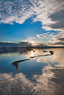 Gary Hart Photography: Morning Like Glass, Mono Lake