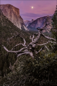 Gary Hart Photography: Magenta Moonrise, Yosemite Valley, Yosemite