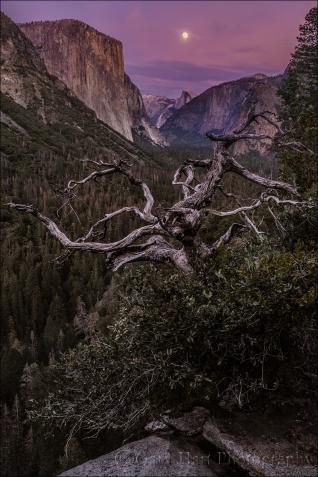 Gary Hart Photography: Magenta Moonrise, Yosemite Valley, Yosemite