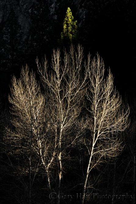 Gary Hart Photography: Winter Light, Yosemite Valley