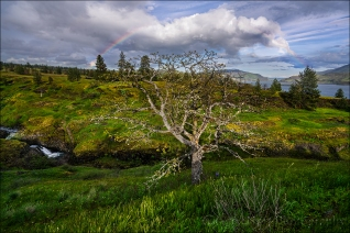 Gary Hart Photography: Spring Rainbow, Catherine Creek Trail, Columbia River Gorge
