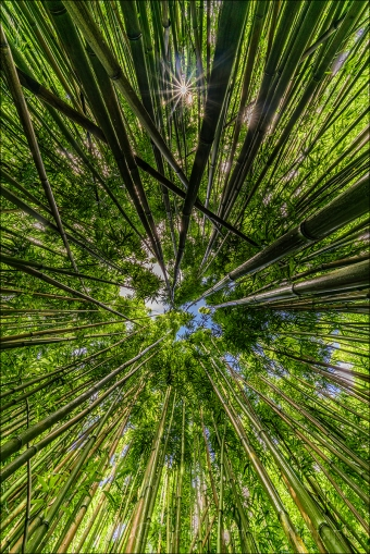 Gary Hart Photography: Bamboo Sunstar, Maui, Hawaii