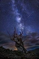 Bristlecone Night, Milky Way from the White Mountains, California