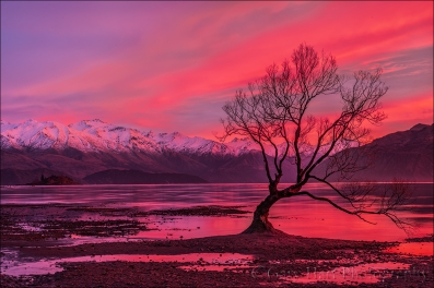 Gary Hart Photography: Crimson Morning, Lake Wanaka, New Zealand