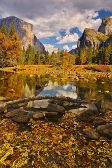 Gary Hart Photography: Floating Leaves, Valley View, Yosemite
