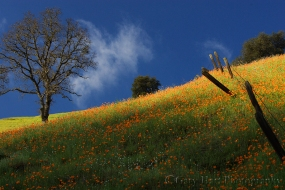 Gary Hart Photography: Poppy Hillside, Highway 49, California Gold Country
