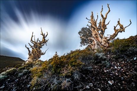 Gary Hart Photography: Nightfall, Schulman Grove, White Mountains, California