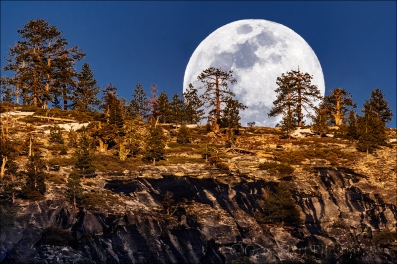 Moonrise Through the Trees, Yosemite